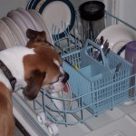 Small Dishwashers with Big Benefits